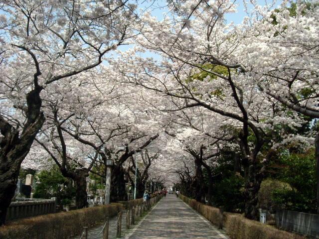 http://sanpo01.lolipop.jp/sanpo/theme/2005/0504aoyama0131.jpg